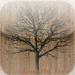 Family Tree HD